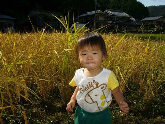 tsubaki+rice.jpg