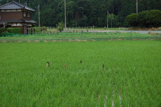 ichijimaai1.jpg