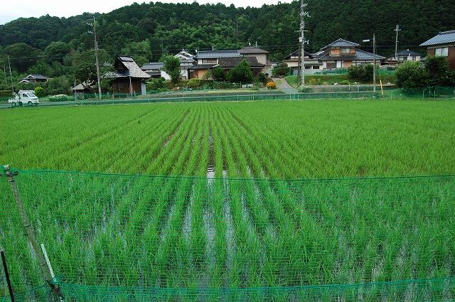 ichijimaai2.jpg