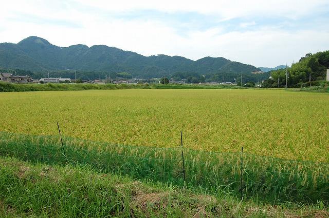 s-DSC_aigamomai11830.jpg