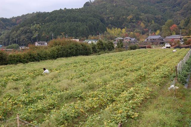 s-DSC_0245.jpg